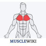 MuscleWikiv1.0.4中文版